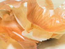 Onion peels Stock Photography