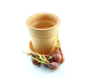 Onion and Pot On white background. Onion and Pot isolated On white background Stock Image