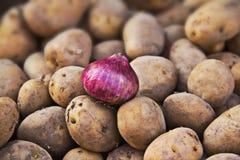 Onion with potatos. Onion on the top of potatos Royalty Free Stock Image