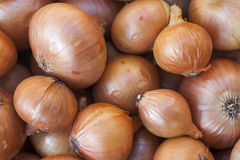 Onion Raw fruit and vegetable backgrounds overhead perspective, part of a set collection Royalty Free Stock Photos