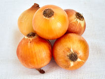 Onion. Raw onion on a white tablecloth Royalty Free Stock Photo