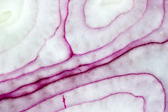 onion red slice Στοκ εικόνα με δικαίωμα ελεύθερης χρήσης