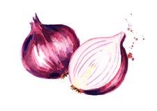 onion red sliced Συρμένη χέρι απεικόνιση Watercolor, που απομονώνεται στο άσπρο υπόβαθρο διανυσματική απεικόνιση