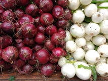 Onion, Red and White Onions Royalty Free Stock Photography