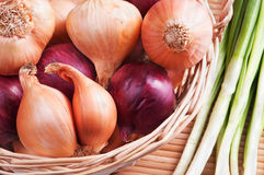 Onion. Red and yellow onions in the bascket Stock Images