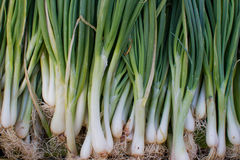 Onion with roots. Fresh onion with roots in market , Thailand Stock Photo