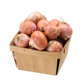 Onion roots Royalty Free Stock Photos