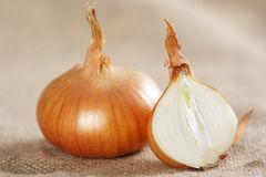 Onion on sacking Stock Photography
