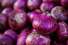 Onion on sale Royalty Free Stock Images