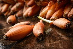 Onion seed Royalty Free Stock Images