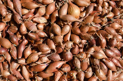 Onion seeds Royalty Free Stock Photography