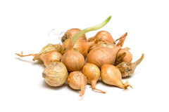 Onion set royalty free stock photo
