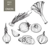Onion. Set of illustrations Stock Photography
