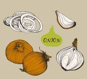 Onion. Set of illustrations Royalty Free Stock Photo