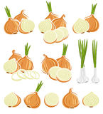 Onion set. Vector Royalty Free Stock Image