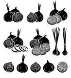 Onion set. Vector Stock Photo