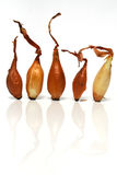 Onion Sets. Or seeds against a white background Stock Image