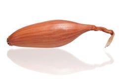 Onion shallot. One onion shallot isolated on white background royalty free stock images