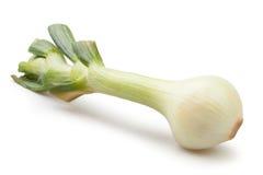 Onion single Stock Photography