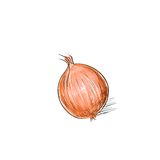Onion sketch color drawing isolated over white Stock Photo