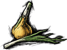 Onion. Sketch vector illustration of onion Royalty Free Stock Photography