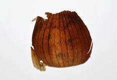Onion skin Stock Photography