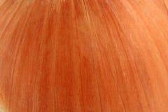 Onion skin macro background Royalty Free Stock Photo