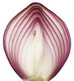 Onion slice. Isolated onion slice on white background stock image