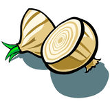 Onion Slice Stock Photography