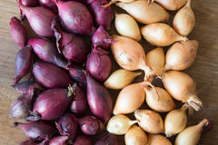 Onion for sowing. Onions background. Stock Photo