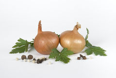 Onion and spices Royalty Free Stock Image