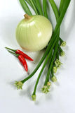 Onion, spring onions and couple chilli Royalty Free Stock Image