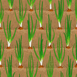 Onion sprout vegetable patches in row seamless. Onion sprout, shoot vegetable patches in row seamless background Stock Photography