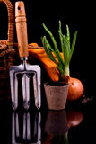 Onion sprouts, basket, rakes and peat pot Royalty Free Stock Photo