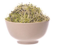 Onion Sprouts in Bowl Isolated Stock Images