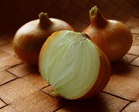 Onion Study 2 Stock Photo
