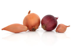 Onion Types Royalty Free Stock Image