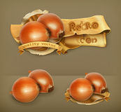 Onion vector icons Stock Photo