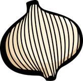 Onion vector illustration. Vector illustration of an onion Stock Photos