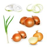 Onion vector illustration Royalty Free Stock Image
