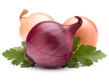 Onion vegetable bulb and parsley leaves still life Stock Images