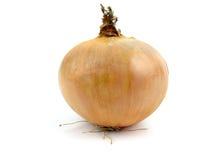 Onion on white. Onion on a white background stock image
