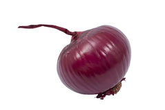 Onion. On a white background Royalty Free Stock Images