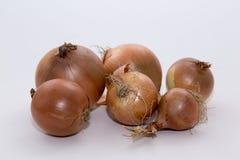 Onion Royalty Free Stock Photo