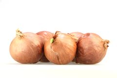 Onion in white background. Onion in white backgroud Royalty Free Stock Photos
