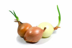 Fresh Onion on white background. Onion on white background cut out stock photo