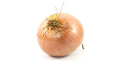 Onion on a white background. Fresh, bulbs of onion, on a white background Stock Photography