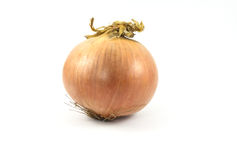 Onion on a white background. Fresh bulbs of onion on a white background,Onion on a white background Stock Photography