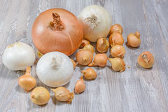 Onion on wooden background. Royalty Free Stock Photo