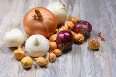 Onion on wooden background. Stock Images